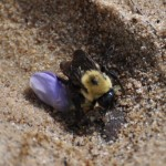 bee flower 150x150 National Parks Week, Native Plant Sales, and More Earth Day Events