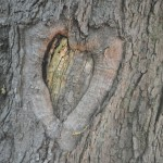 tree heart 150x150 Connect with Your Inner Lorax: Become a Tree Steward