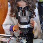 Invasive Species Awareness Activities for Kids at the US Botanic Garden