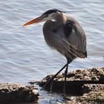 Great Green Escape: Dyke Marsh Wildlife Preserve